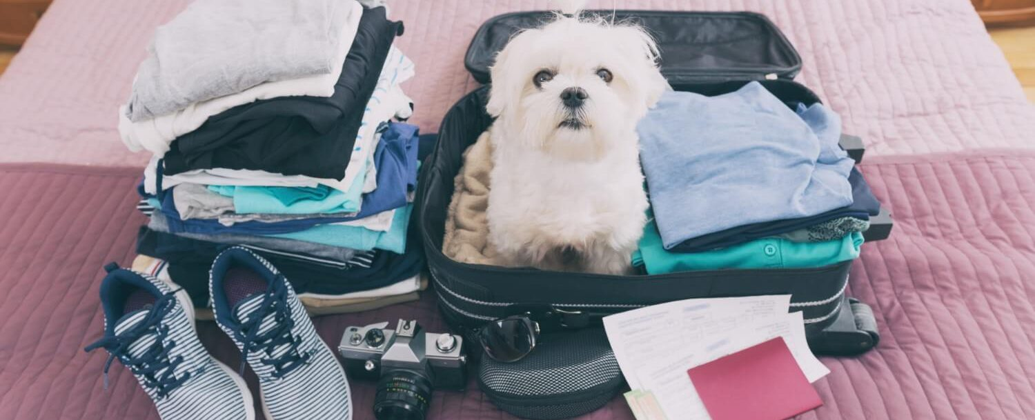 luggage with dog on top