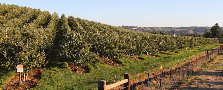 Vineyard/landscape view of Yakima.